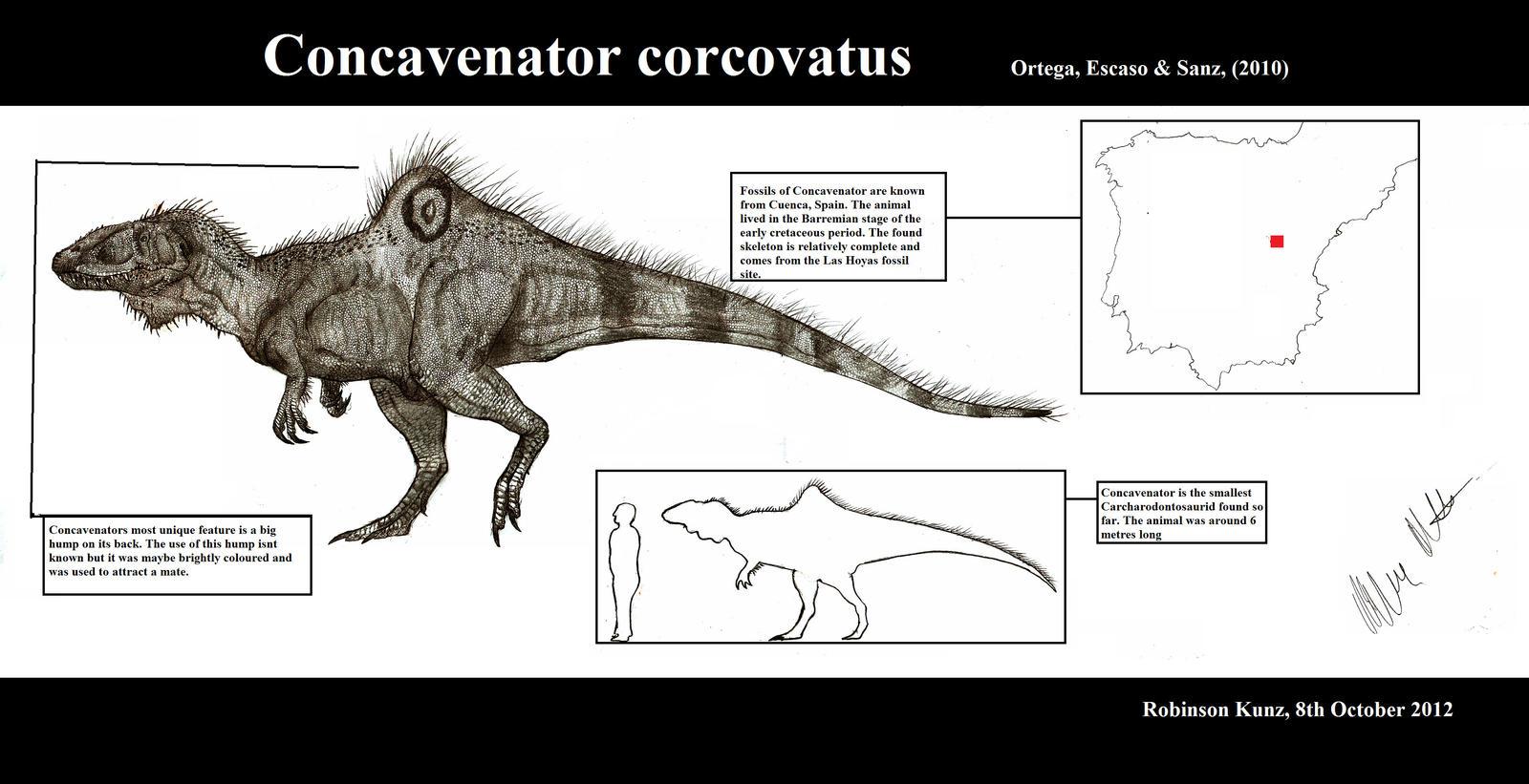 Concavenator corcovatus by Teratophoneus