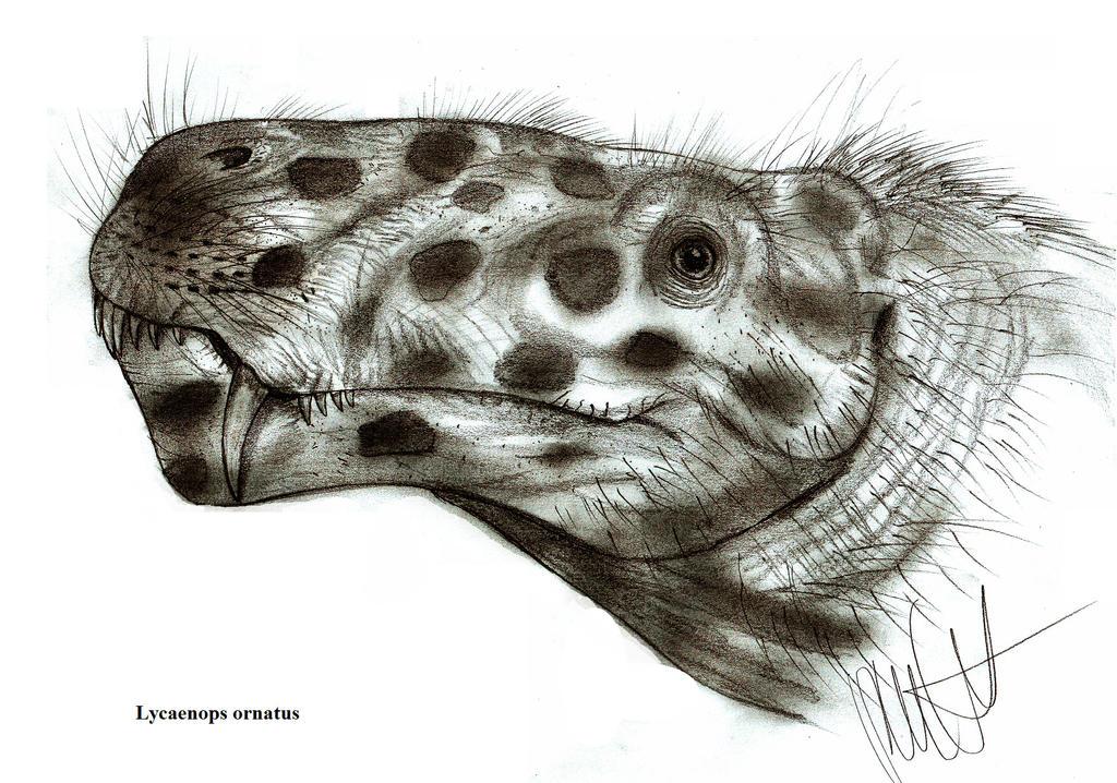 Lycaenops Primeval