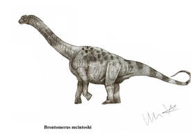 Brontomerus mcintoshi by Teratophoneus