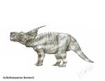 Achelousaurus horneri by Teratophoneus