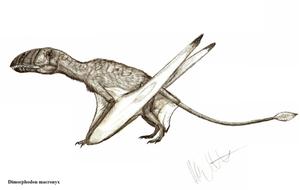 Dimorphodon macronyx by Teratophoneus