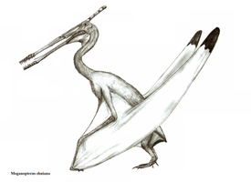 Moganopterus zhuiana by Teratophoneus