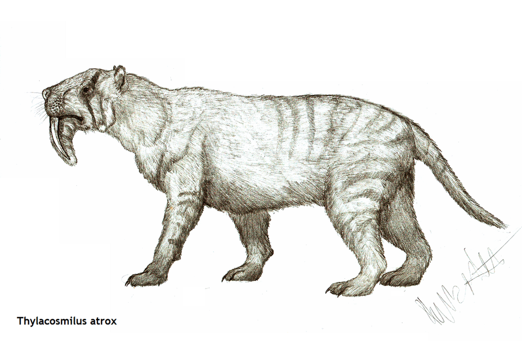 http://fc00.deviantart.net/fs70/i/2013/278/3/7/thylacosmilus_atrox_by_teratophoneus-d6pbch3.png