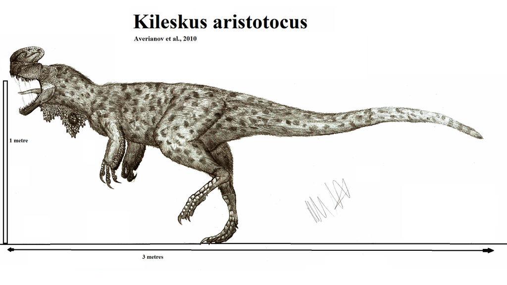 Kileskus aristotocus