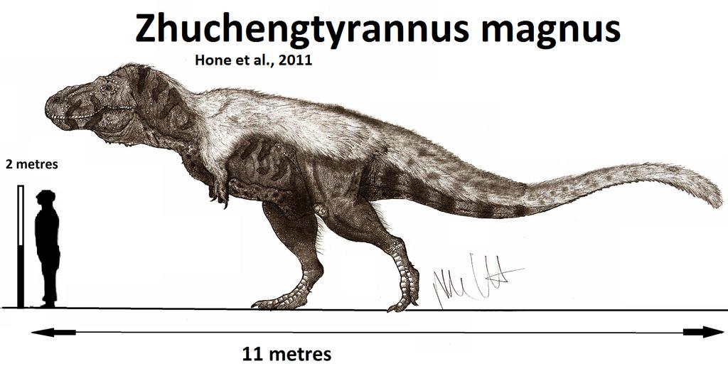 Zhuchengtyrannus magnus (updated) by Teratophoneus