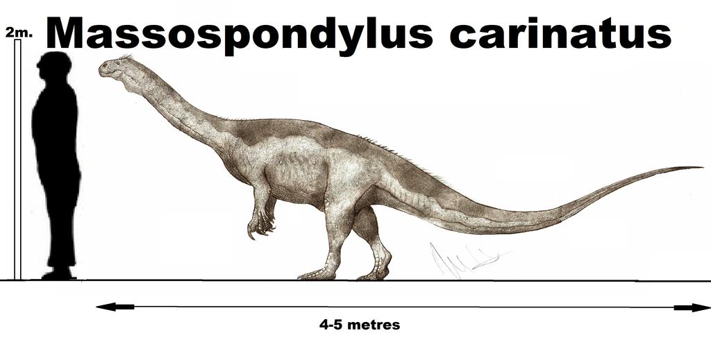 Massospondylus carinatus by Teratophoneus