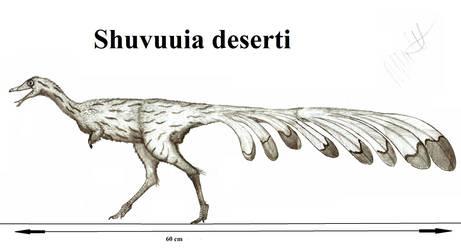 Shuvuuia deserti