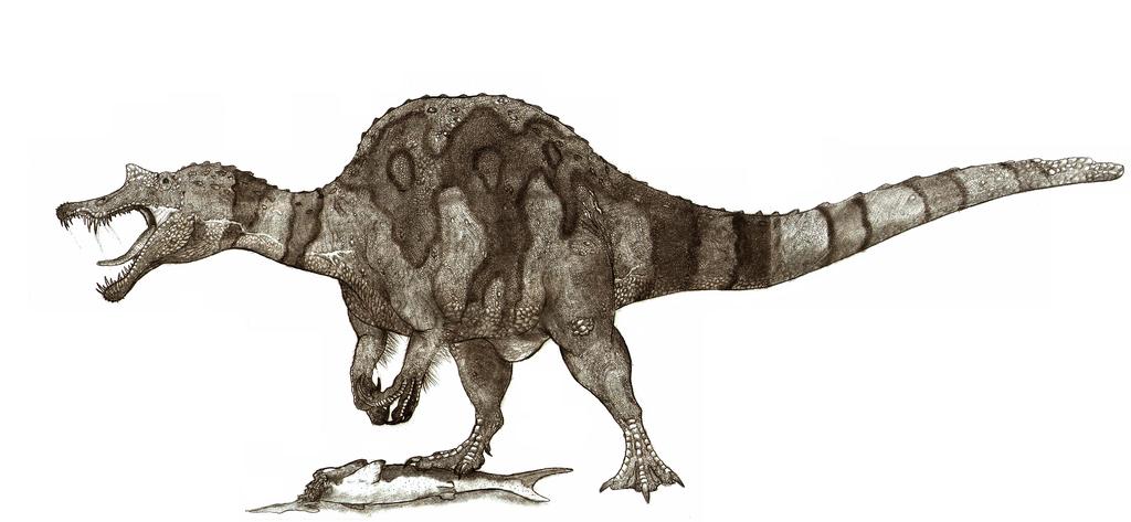 Znalezione obrazy dla zapytania sigilmassasaurus