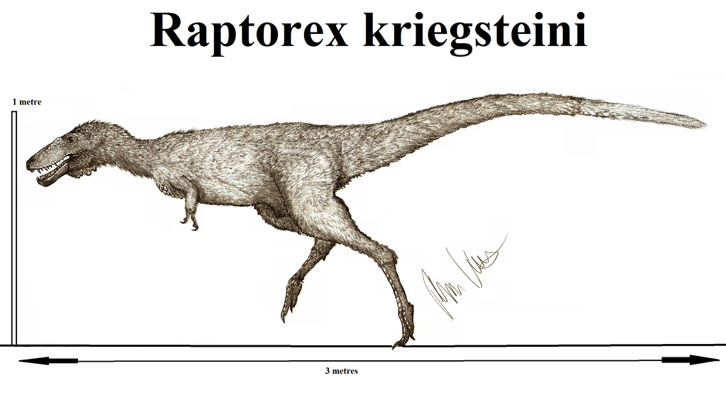 Raptorex kriegsteini2 by Teratophoneus
