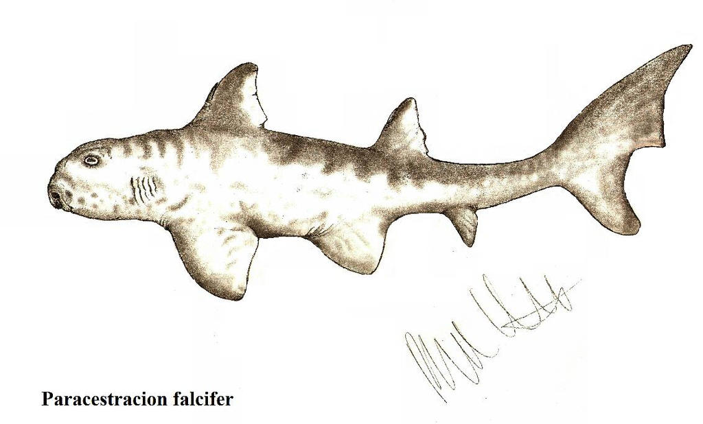 Paracestracion falcifer by Teratophoneus