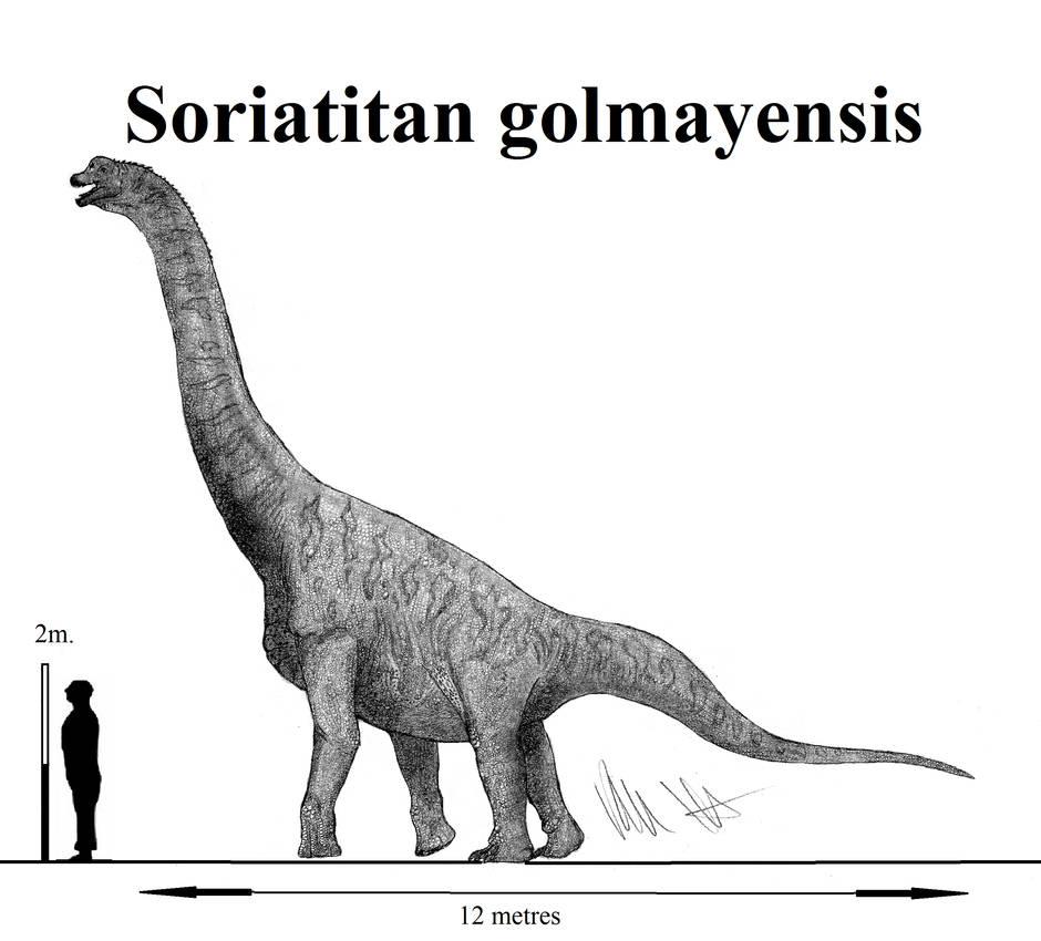 Soriatitan golmayensis by Teratophoneus