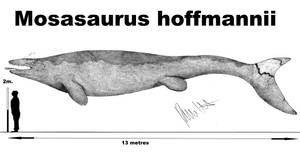 Mosasaurus hoffmannii by Teratophoneus