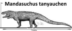 Mandasuchus tanyauchen