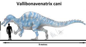 Vallibonavenatrix cani