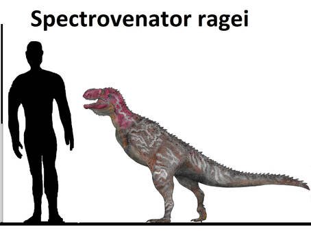 Spectrovenator ragei