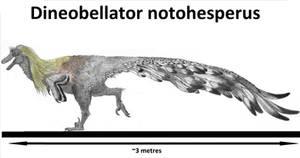 Dineobellator notohesperus