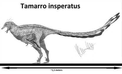 Tamarro insperatus