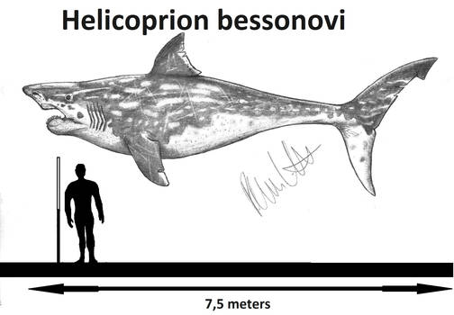 Helicoprion bessonovi
