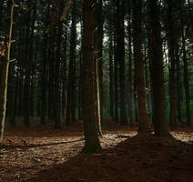 Premade Nature Woods Forest Background by Sannalee01