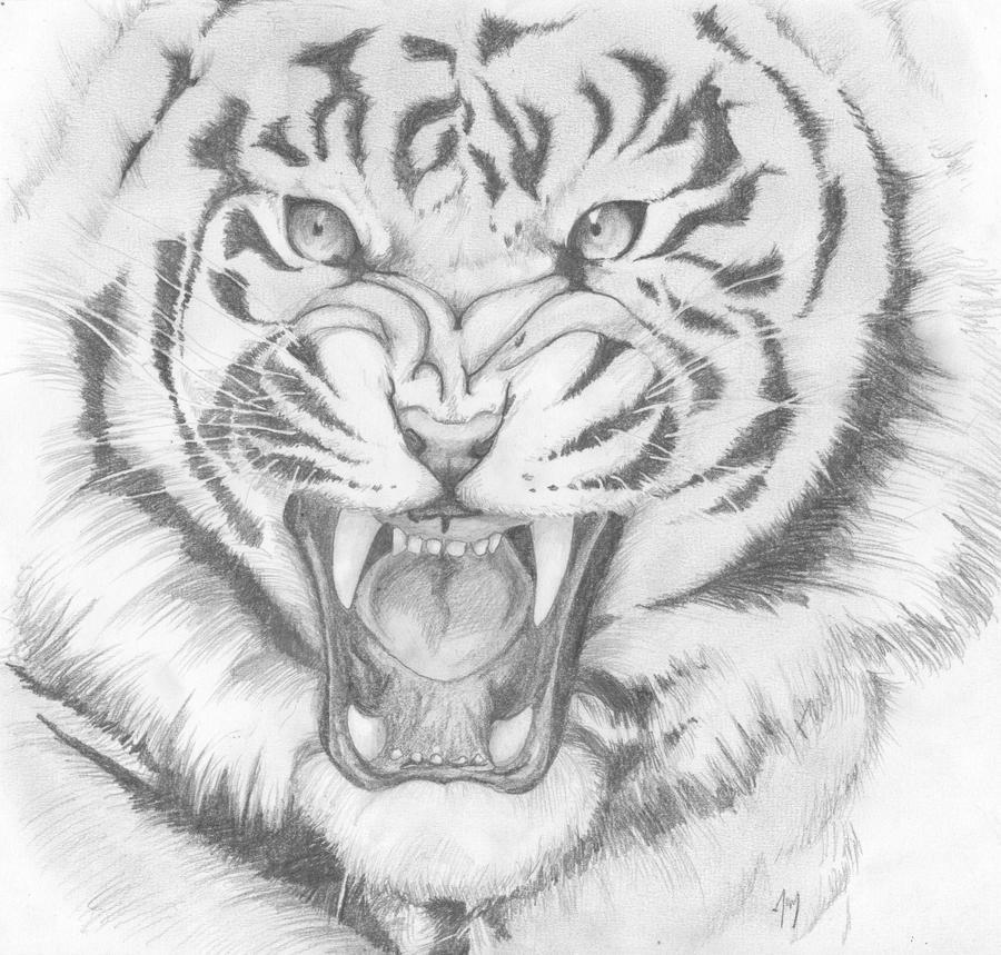 Angry Tiger by Joyprillard on DeviantArt