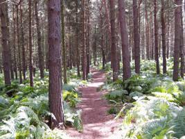 A woodland path by UrbanIndustries