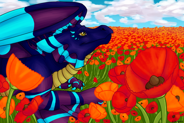 Among The Poppies by Gragaza