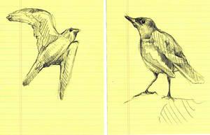 Bird Study I and II