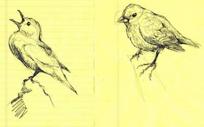 Bird Study VII and VIII