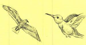 Bird Study IX and X