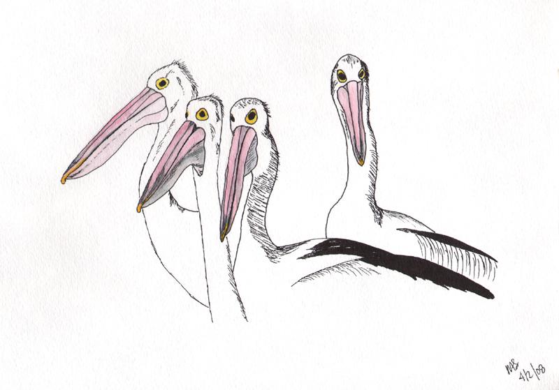 Australian Pelicans by Herebedragons66