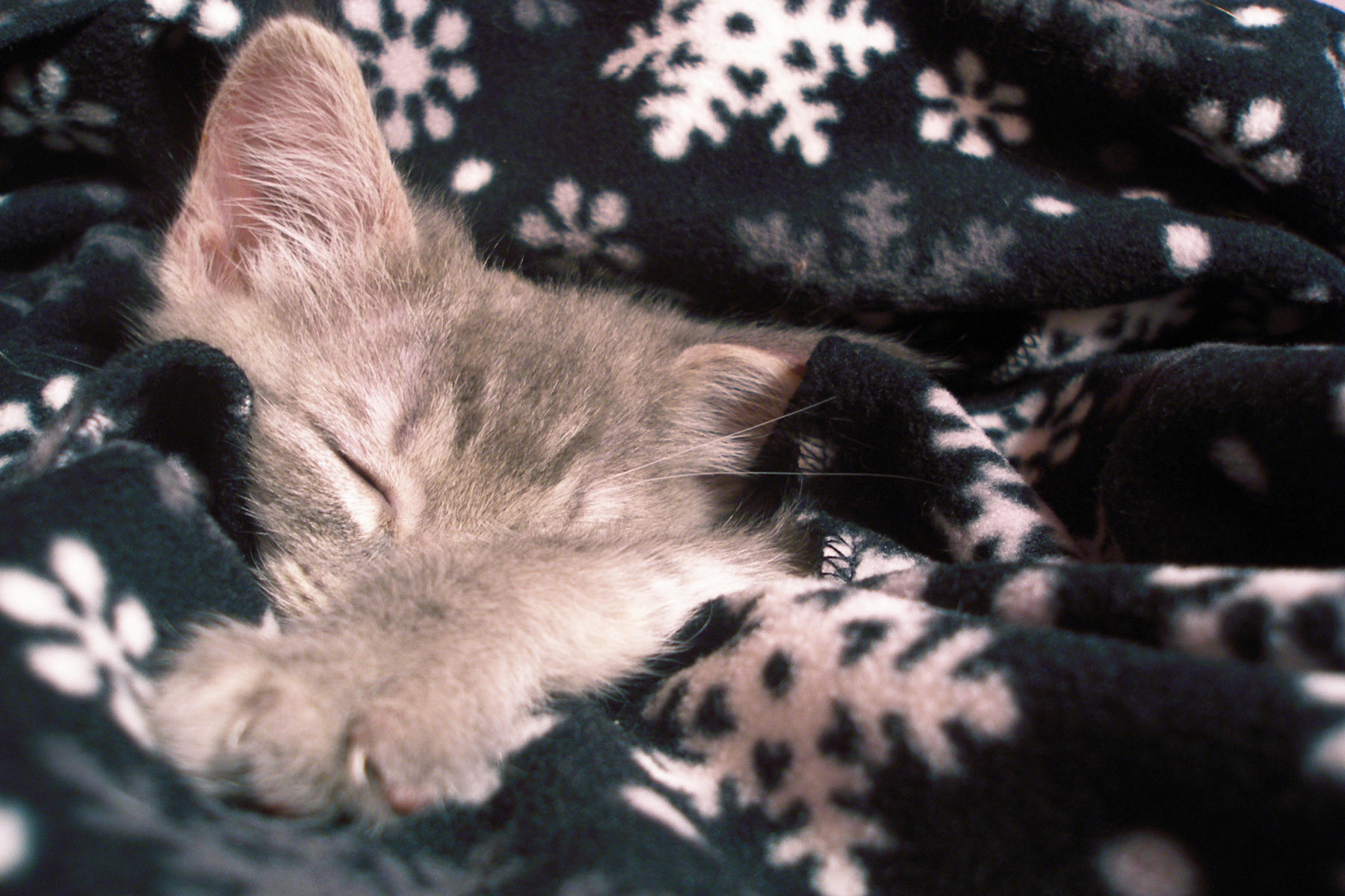 Cozy Winter Blanket Photo by meimmo