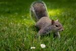 Curious Squirrel (new edit)