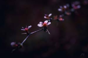A Flowers Thorns (Day 73) by Jorgipie