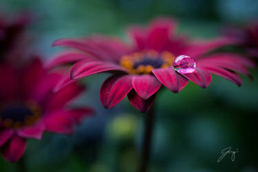Crimson Tear by Jorgipie