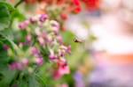Little Bee Dreams