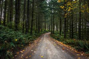 Peaceful Forest Stroll by Jorgipie