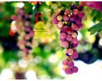 ... Grapes ...