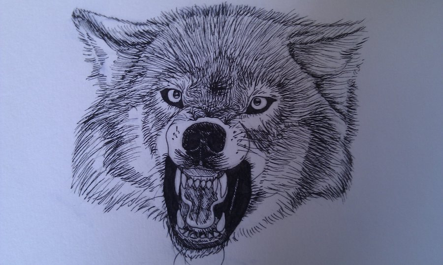 Snarling Wolf By IndiWolfOnline On DeviantArt