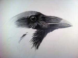 Poe- Work In progress