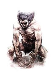 Primal Wolverine by shurita