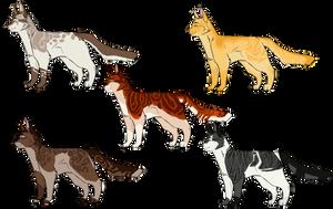 Moth-Inspired Cat Adopts [1 LEFT!] (OTA)