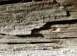 113 - old wood