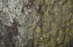 15 - tree bark