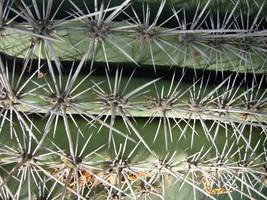 98 - cactus by WCat-stock