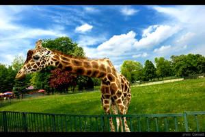 Giraffe by Corvus5