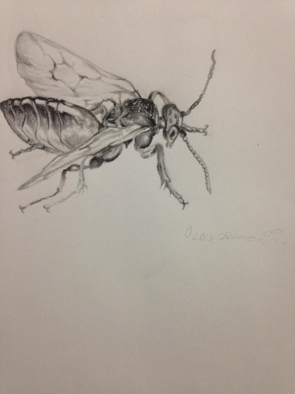 insect drawing by walkingwithdead on deviantart