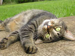 MY cat skittles by Angelgirl808