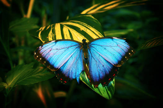 butterfly on a leaf 2