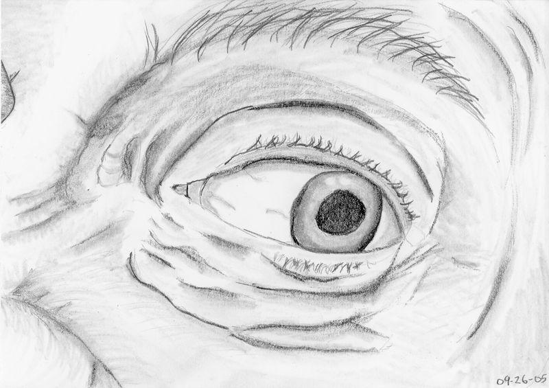 polarpaul's pupil