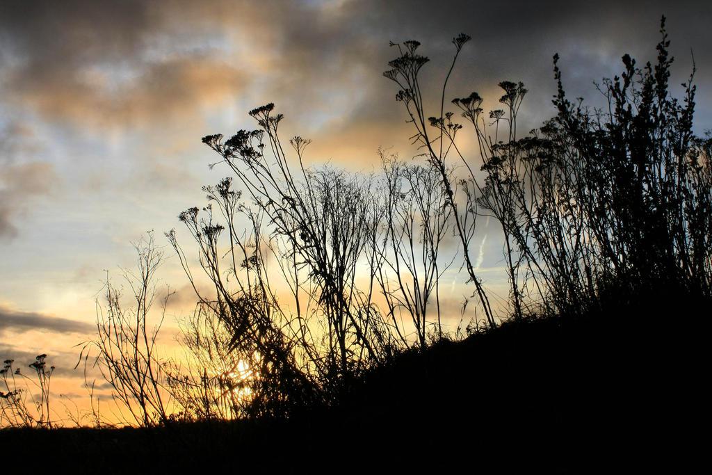 Wild plants by Flowertree-elf